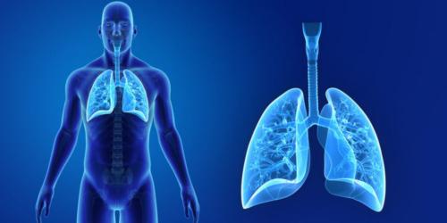 Sistema Respiratorio: Aprende Anatomía Humana